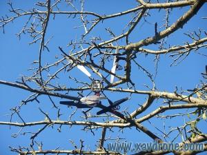 ethos qx 130 dans arbre