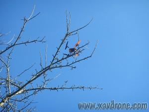 180 qx dans un arbre