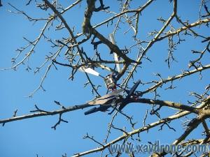 ethos 130qx dans un arbre