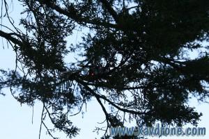 ethos 130qx dans les branches