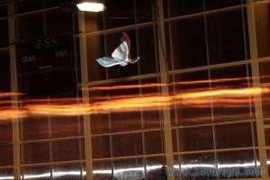 avion bionique