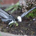 oiseau metafly