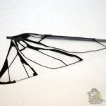 aile droite du metafly